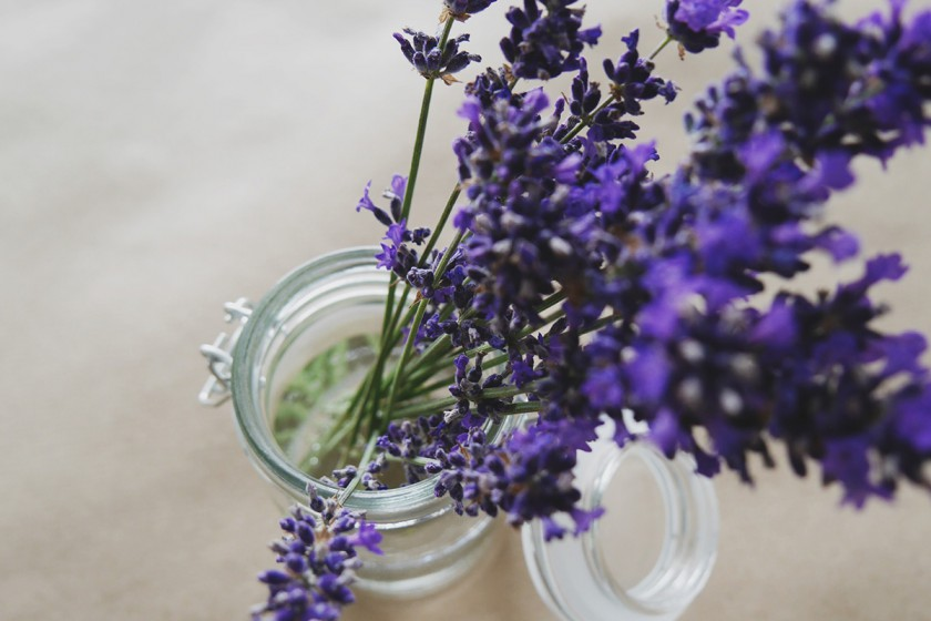 lavender-840x560